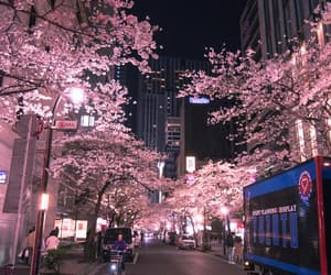 city, japan, and pink image