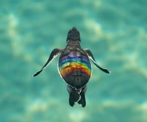 animals, ocean, and rainbow image