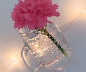 carnations, pink, and pretty image