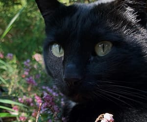 black cat, cats, and Chat Noir image