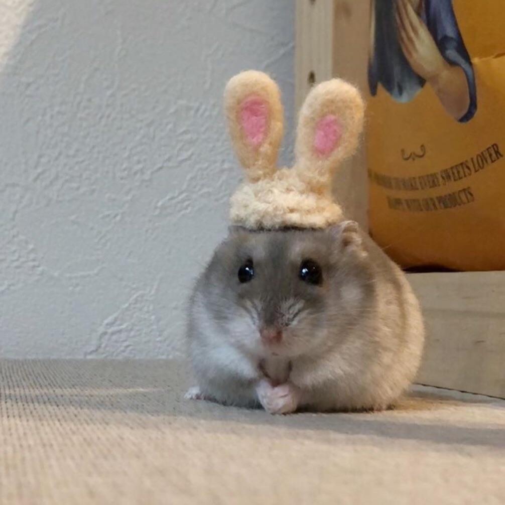 animal, bunny ears, and hamster image