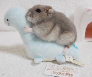 animal, pet, and soft image