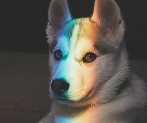 dog, animal, and rainbow image