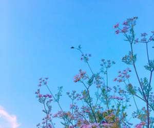 blue, cilantro, and colorful image