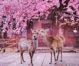 animal, pink, and japan image