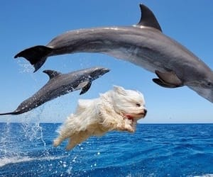 dog, water, and dolphine image