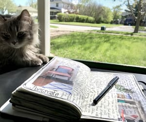 books, cats, and journaling image
