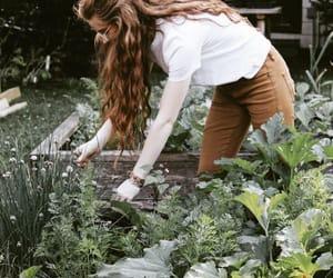 aesthetic, garden, and gardening image