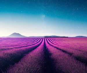 blue, lavender, and lilac image