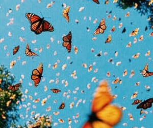 butterfly, beautiful, and nature image