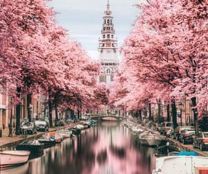 pink, aesthetic, and amsterdam image