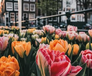 aesthetic, amsterdam, and flower image