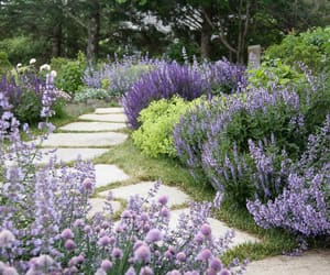 flowers, garden, and purple image