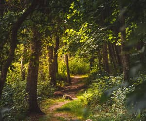 forest, light, and path image
