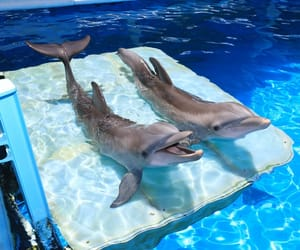 animals, dolphin, and cute image