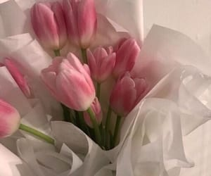 beautiful and pink tulips image