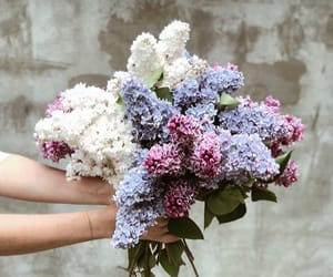 bouquet, flowers, and lilac image