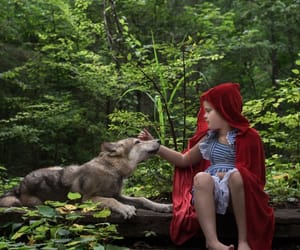 little red riding hood, wolfdog, and wolf image