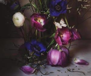 botany, flowers, and photography image