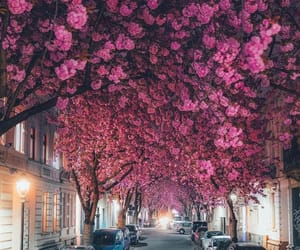 beautiful, flowers, and germany image