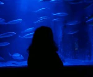 aquarium, black, and blue image