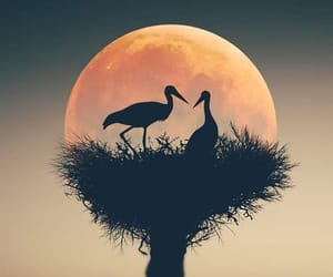birds, moon, and nest image