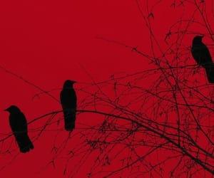 amazing, raven, and tree image