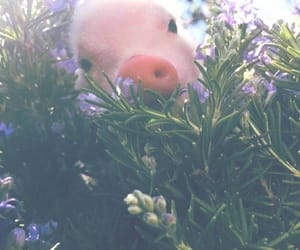 pig, animal, and flowers image