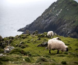 animals, cliff, and ireland image