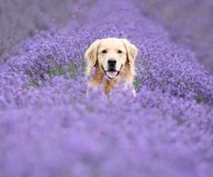 beautiful, dog, and flowers image