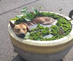 agua, perrito, and dogo image