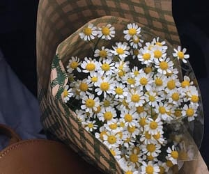 beauty, bouquet, and daisy image