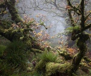 forest, dartmoor, and devon image