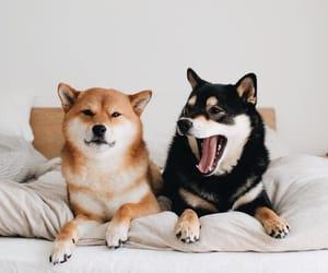 dog, like, and nice image