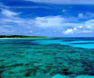 coral, japan, and okinawa image