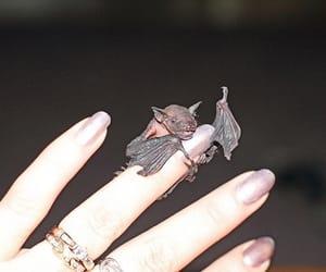 bat, baby, and bats image