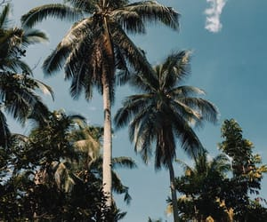 palm trees and paradise image