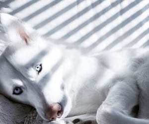 dog, white, and animal image