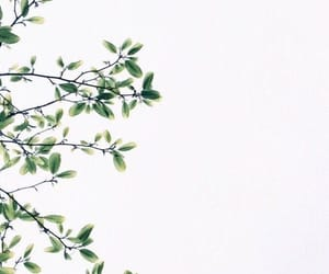 wallpaper, aesthetic, and leaves image