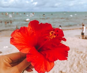 beach, beauty, and blossom image
