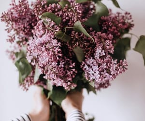 bouquet, florals, and flowers image