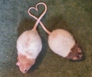 rat and animals image
