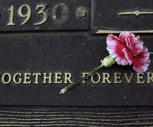 forever, together, and flowers image