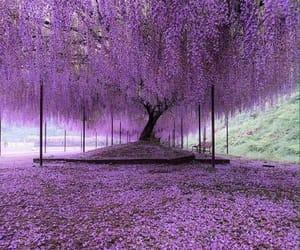 purple, tree, and nature image