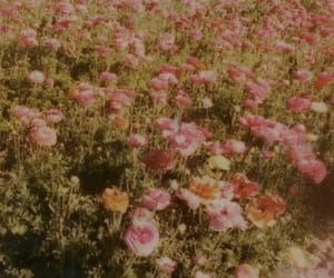 flowers, song, and aesthetic image