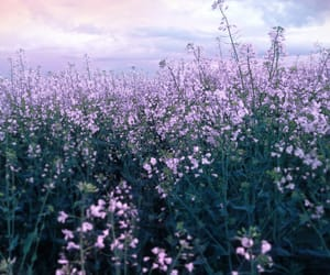 flowers, purple, and clouds image