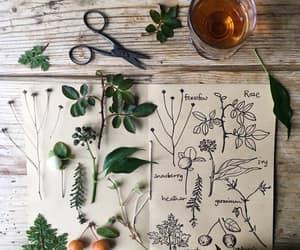 illustration and plants image