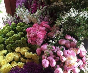 colourful and flowers image