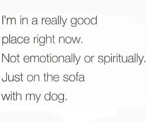 dog, emotional, and good image