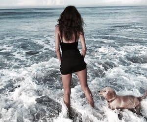 beach, dog, and ocean image